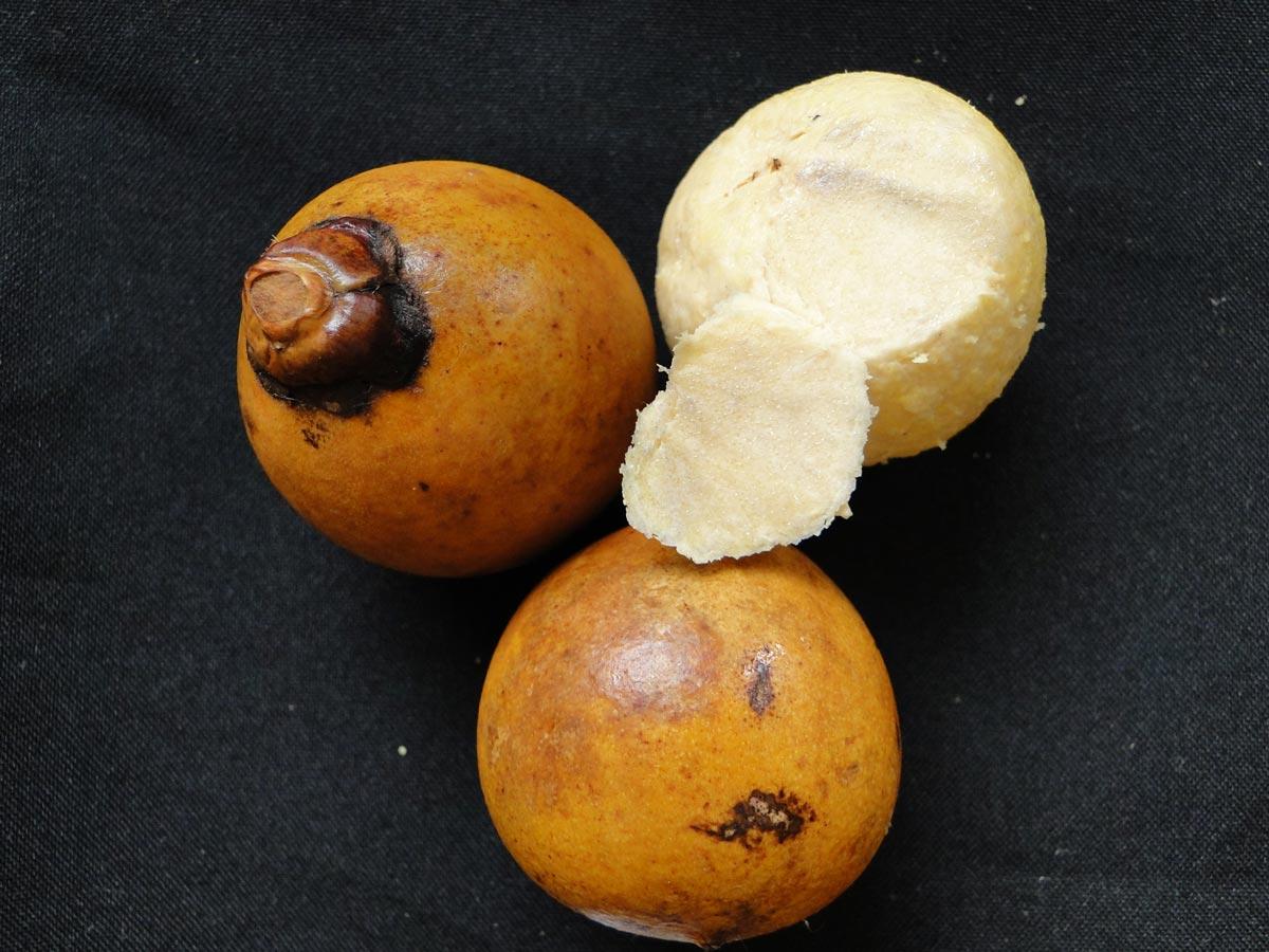 Resultado de imagem para frutos de macaúba
