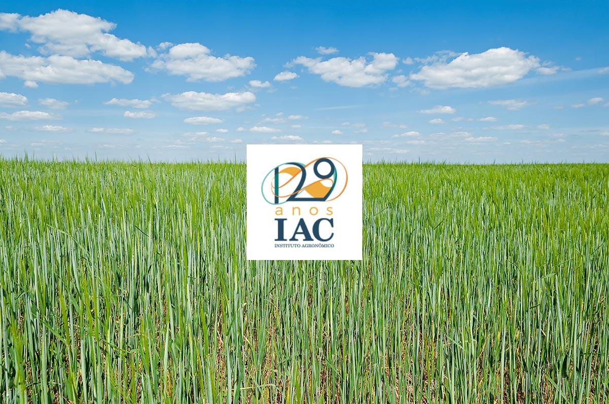 Editorial IAC
