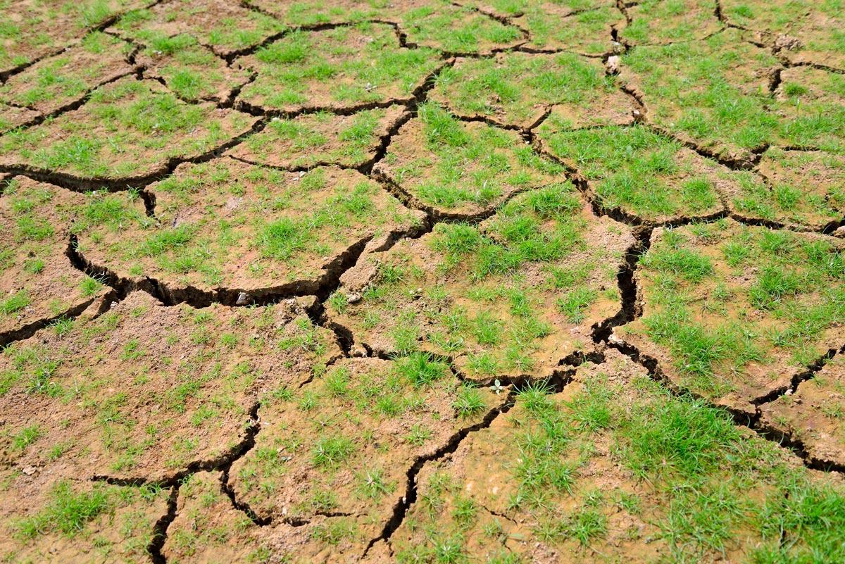 Bioeconomia e monitoramento probabilístico dos eventos de seca  no Estado de São Paulo