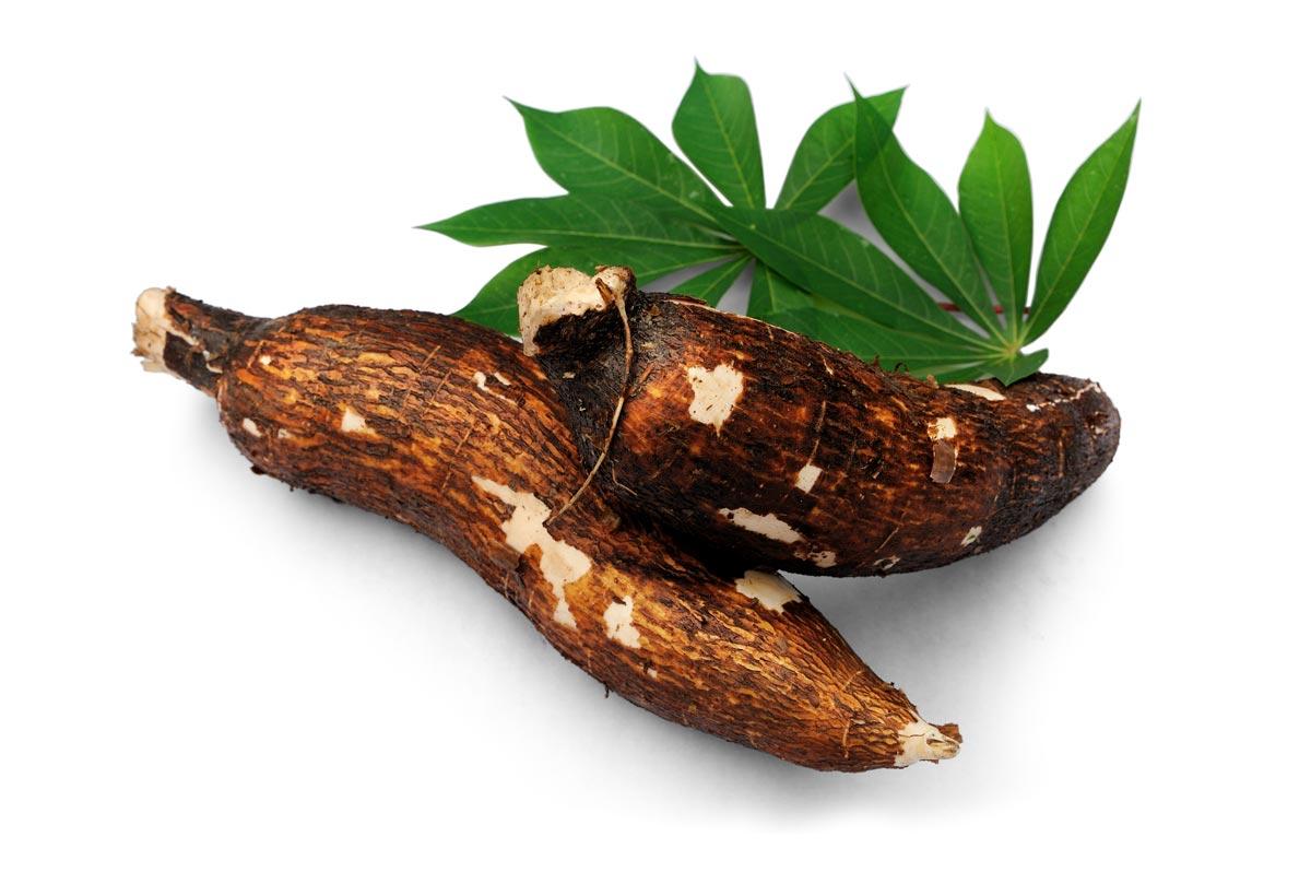 Potencial da cultura da mandioca para bioenergia