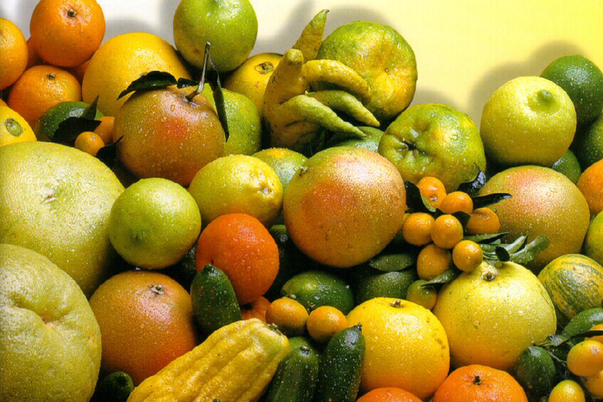Diversidade de citros e gêneros afins representada no Banco Ativo de Germoplasma de Citros no Centro de Citricultura Sylvio Moreira/IAC.