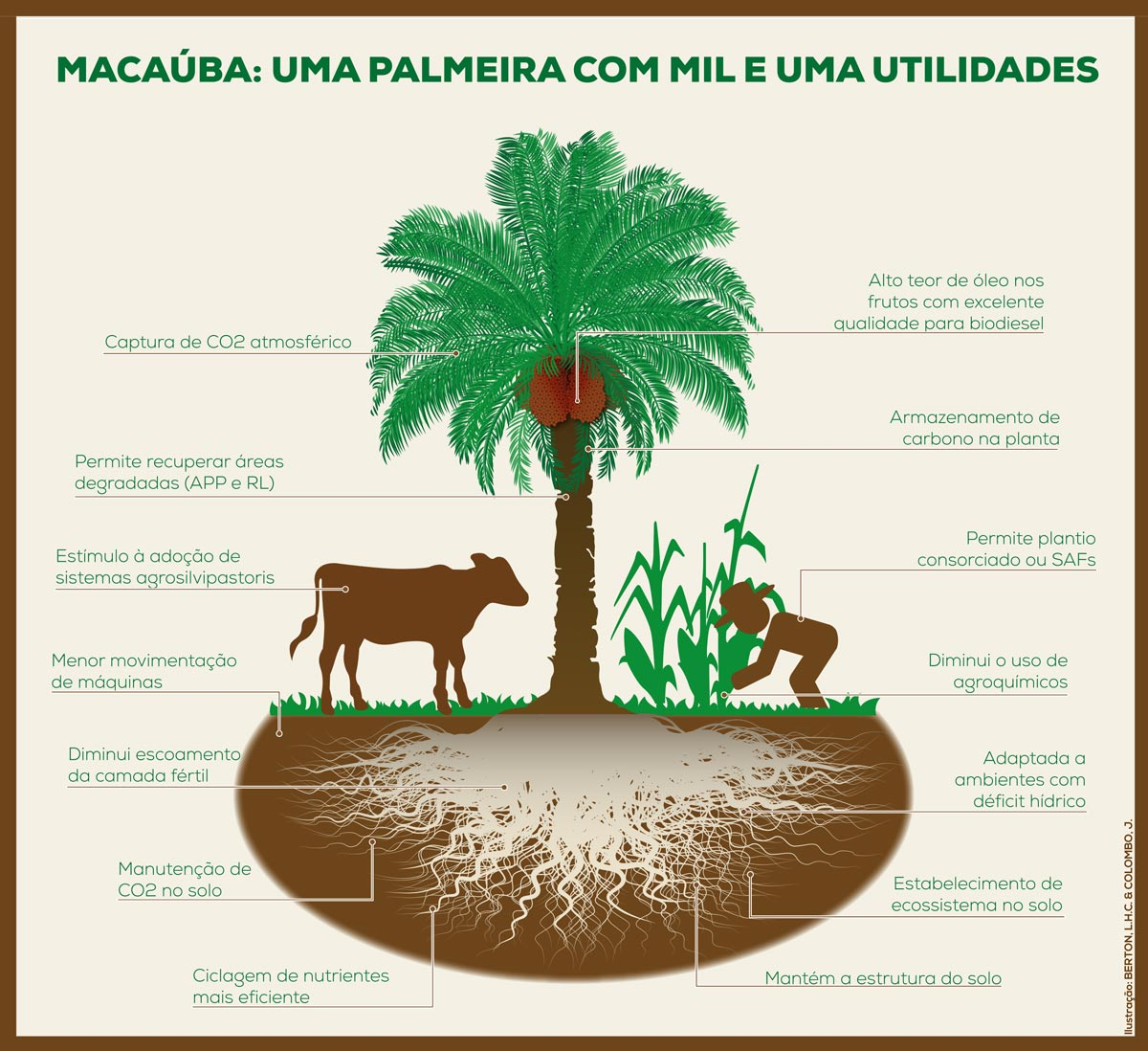 Macaúba - Uma Palmeira com mil utilidades